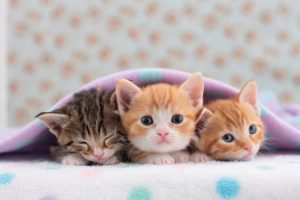 Three cute kittens under a blanket